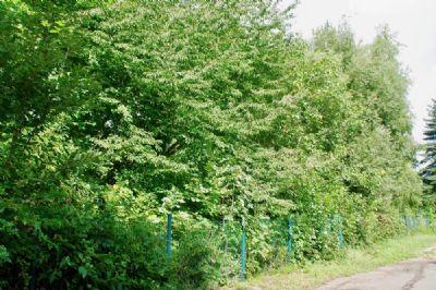 Baugrundstück in Oberlungwitz bei Chemnitz kaufen