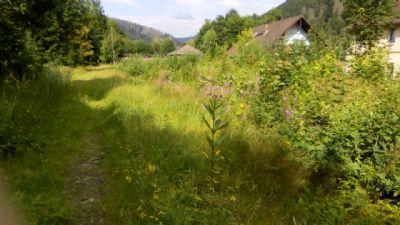 Bad Lauterberg, Grundstück