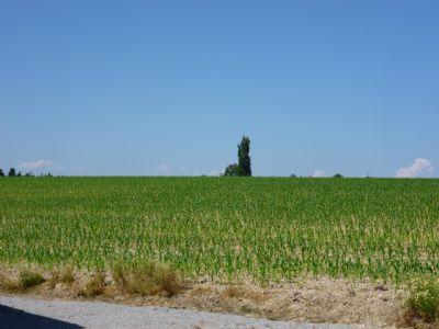 Tann Bauernhöfe, Landwirtschaft, Tann Forstwirtschaft
