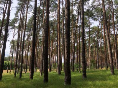 Schönewalde Bauernhöfe, Landwirtschaft, Schönewalde Forstwirtschaft