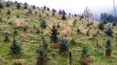 Hüttenberg Bauernhöfe, Landwirtschaft, Hüttenberg Forstwirtschaft