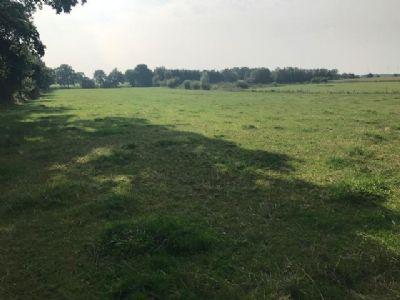 Aurich Bauernhöfe, Landwirtschaft, Aurich Forstwirtschaft
