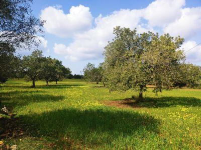 Llucmajor Grundstücke, Llucmajor Grundstück kaufen