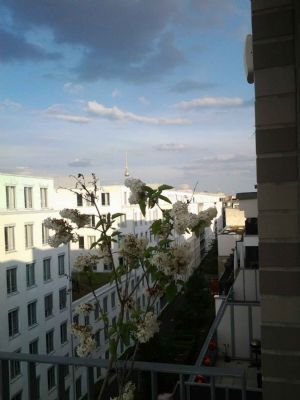3-Zimmer-Luxus Penthouse, Mitte, ab sofort