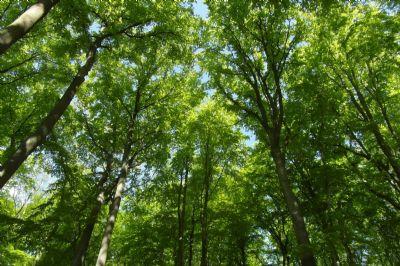 Privatwald, gepflegter Buchenbestand, nichtalltägliche Anlagemöglichkeit