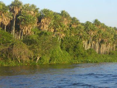 Paraguay Bauernhöfe, Landwirtschaft, Paraguay Forstwirtschaft