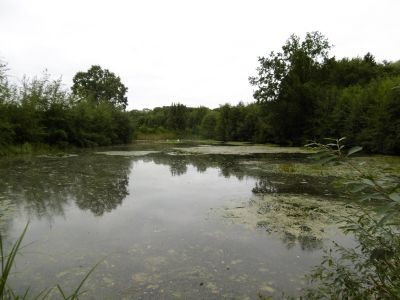 Lütjensee-Dwerkaten Bauernhöfe, Landwirtschaft, Lütjensee-Dwerkaten Forstwirtschaft