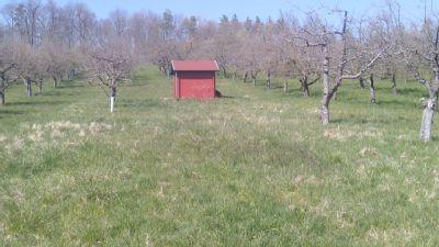Achalmblick! Streuobstwiesen-Grundstück mit schönem Obstbaumbestand und Hütte