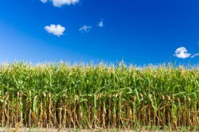 Eppishausen Bauernhöfe, Landwirtschaft, Eppishausen Forstwirtschaft