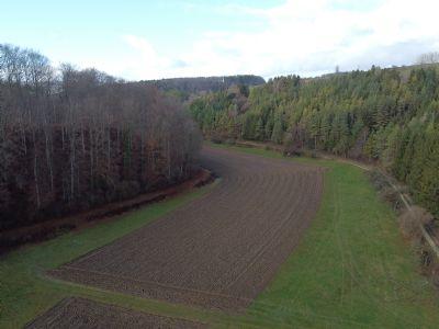 Engen Bauernhöfe, Landwirtschaft, Engen Forstwirtschaft