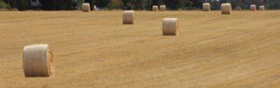 Braila Bauernhöfe, Landwirtschaft, Braila Forstwirtschaft