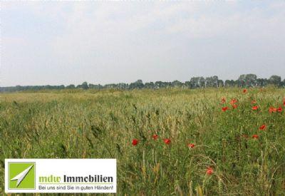 Plau Bauernhöfe, Landwirtschaft, Plau Forstwirtschaft