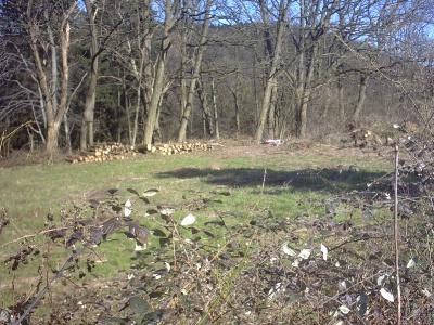 Homburg Bauernhöfe, Landwirtschaft, Homburg Forstwirtschaft