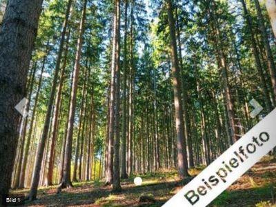 Brandenburg Bauernhöfe, Landwirtschaft, Brandenburg Forstwirtschaft