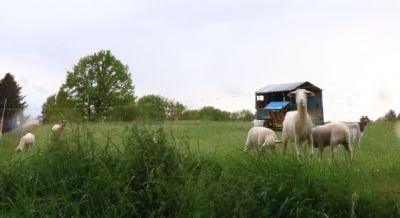 Bennewitz Bauernhöfe, Landwirtschaft, Bennewitz Forstwirtschaft