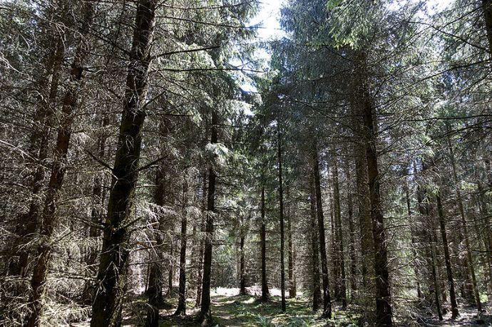 Waldflächen in Georgenthal