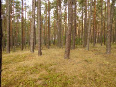 Lychen Bauernhöfe, Landwirtschaft, Lychen Forstwirtschaft