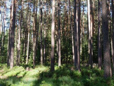 Schwanstetten Bauernhöfe, Landwirtschaft, Schwanstetten Forstwirtschaft