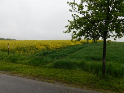 Erlau Bauernhöfe, Landwirtschaft, Erlau Forstwirtschaft