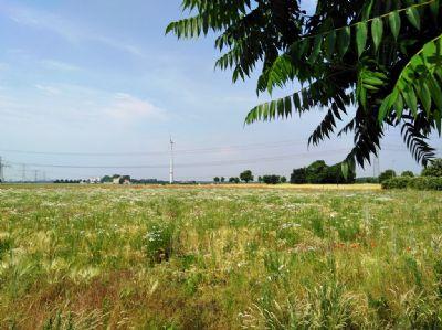 Ahrensfelde Grundstücke, Ahrensfelde Grundstück kaufen