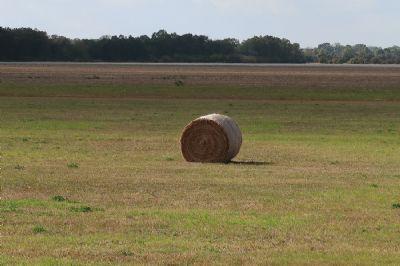 Legde Bauernhöfe, Landwirtschaft, Legde Forstwirtschaft