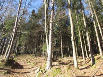 36.000 m² Mischwald in der Nähe von Wiesenfelden