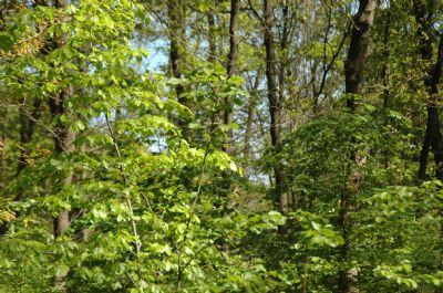 Wardenburg Bauernhöfe, Landwirtschaft, Wardenburg Forstwirtschaft