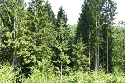 Plettenberg Bauernhöfe, Landwirtschaft, Plettenberg Forstwirtschaft