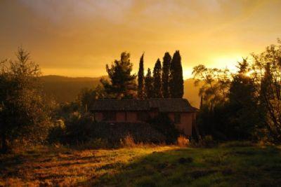 San Miniato Bauernhöfe, Landwirtschaft, San Miniato Forstwirtschaft