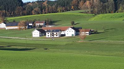 Niederbergkirchen Bauernhöfe, Landwirtschaft, Niederbergkirchen Forstwirtschaft