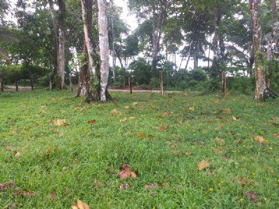 Isla Colón, Bocas del Toro Grundstücke, Isla Colón, Bocas del Toro Grundstück kaufen