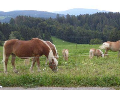 Görwihl Bauernhöfe, Landwirtschaft, Görwihl Forstwirtschaft