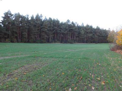 Luckenwalde Bauernhöfe, Landwirtschaft, Luckenwalde Forstwirtschaft