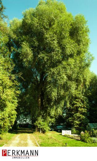 Haus am See NATUR PUR / 2700qm² mit gepflegtem Baumbestand zu verkaufen