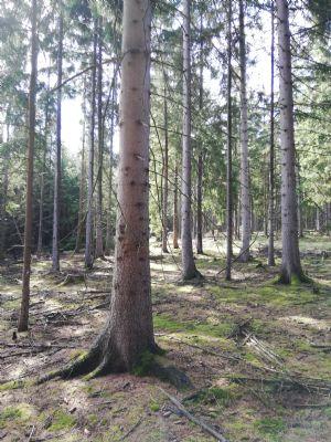 Remda-Teichel Bauernhöfe, Landwirtschaft, Remda-Teichel Forstwirtschaft