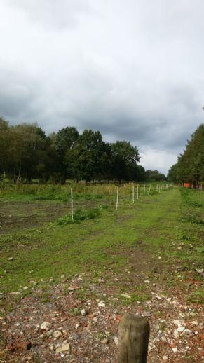 Grundstück im Asselermoor, Gemeinde Drochtersen