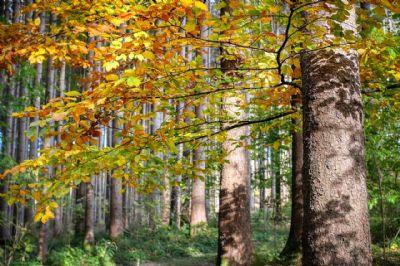Nürnberg Bauernhöfe, Landwirtschaft, Nürnberg Forstwirtschaft