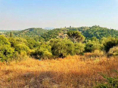 Korfu Bauernhöfe, Landwirtschaft, Korfu Forstwirtschaft