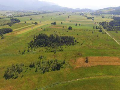 Großweil Bauernhöfe, Landwirtschaft, Großweil Forstwirtschaft