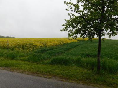 Hainichen Bauernhöfe, Landwirtschaft, Hainichen Forstwirtschaft